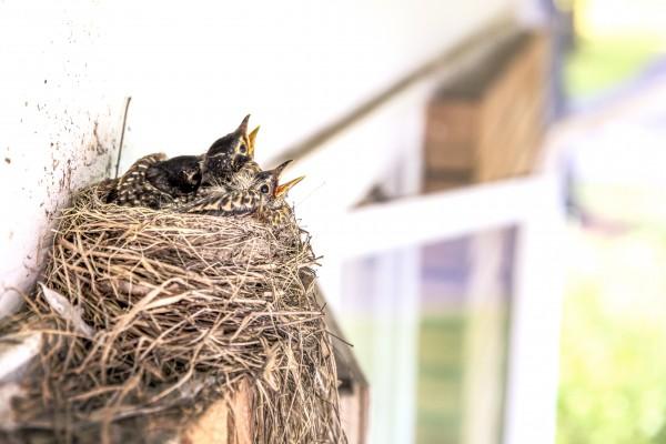 Bird's Nest Custody Helps a Family Move Forward